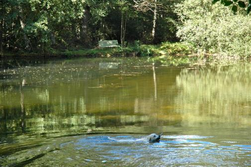 zwembad voor onze hondjes